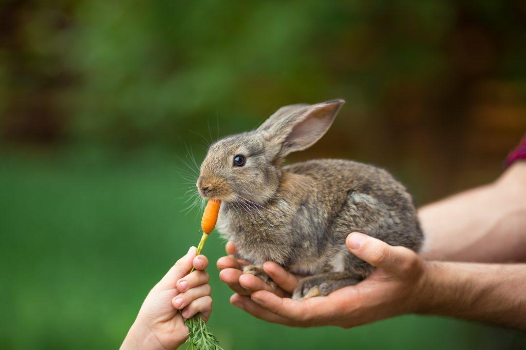 Fütterung von Heimtieren